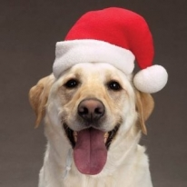 Christmas Santa Dog Hat