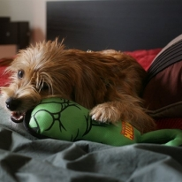 Hulk Fist Oxford Tug Dog Toy