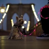 Light-Up LED Dog  Leash