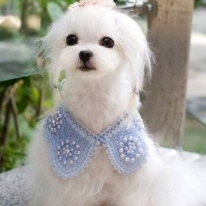 Pet Collar Charms Dog Bib Necklace