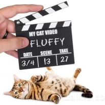 Tiny Cat Video Clapperboard