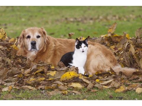 Animal Aid Inc