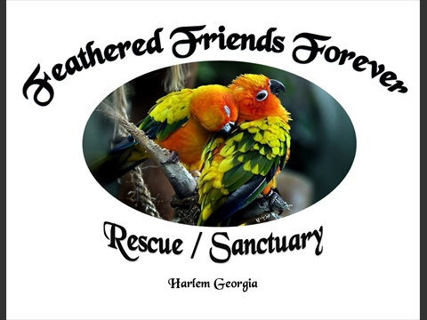 Feathered Friends Forever Rescue/Refuge
