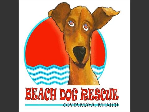 Beach Dog Rescue of Costa Maya