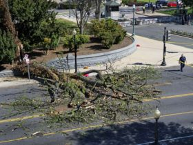 Police block off a section of a street after part of a tree fell and injured a man on the U.S. Capitol grounds in Washington, on Tuesday, April 18, 2017. (Linda Davidson/The Washington Post via AP) (Associated Press)