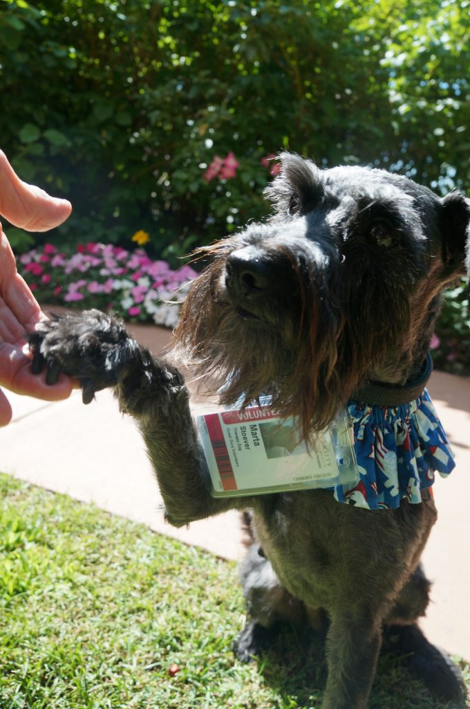 Marta, a therapy dog at University of Colorado Hospital, is shown shaking a paw.