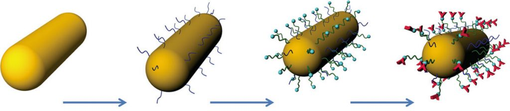 graphic that shows how gold nanorods with receptors bind with protein.