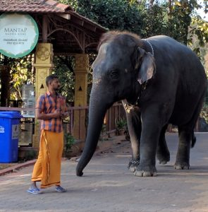 A photo of a man looking at an elephant in India.