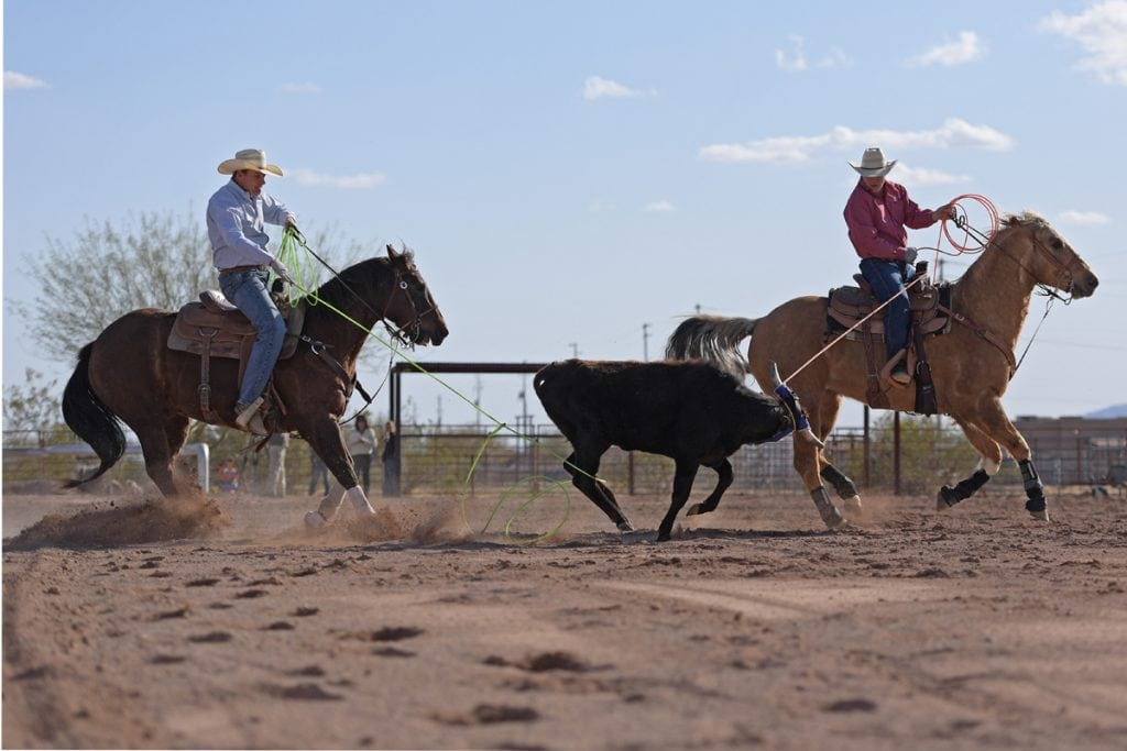 Archie Chant and Jason Stoneback on their horses. They are roping a steer. They've completed a pass and both men have caught the steer.
