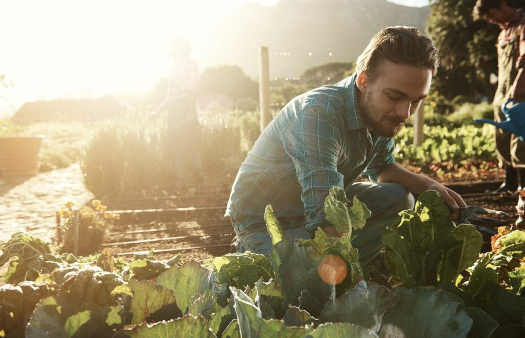 Shot of a young man working in an organic vegetable garden plot in the late afternoon