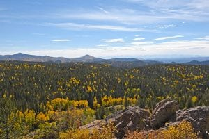A view from a hillside of a pine forest speckled with yellow aspen trees.
