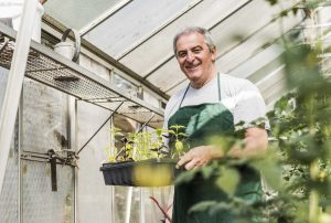 man in a greenhouse holding a try of seedlings