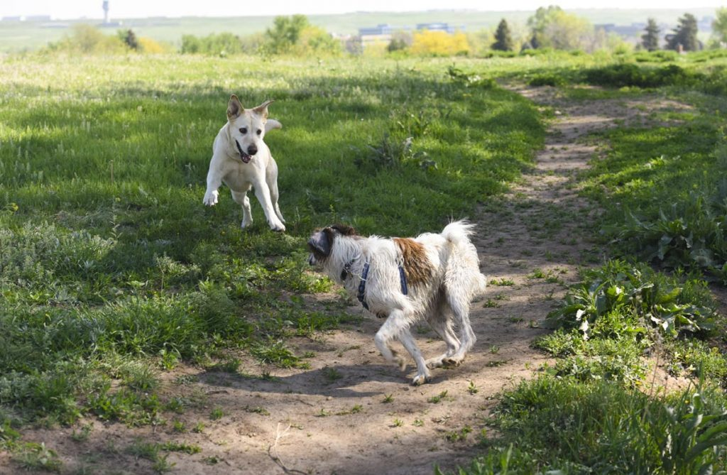 Best off-leash dog parks in Colorado - UCHealth Today