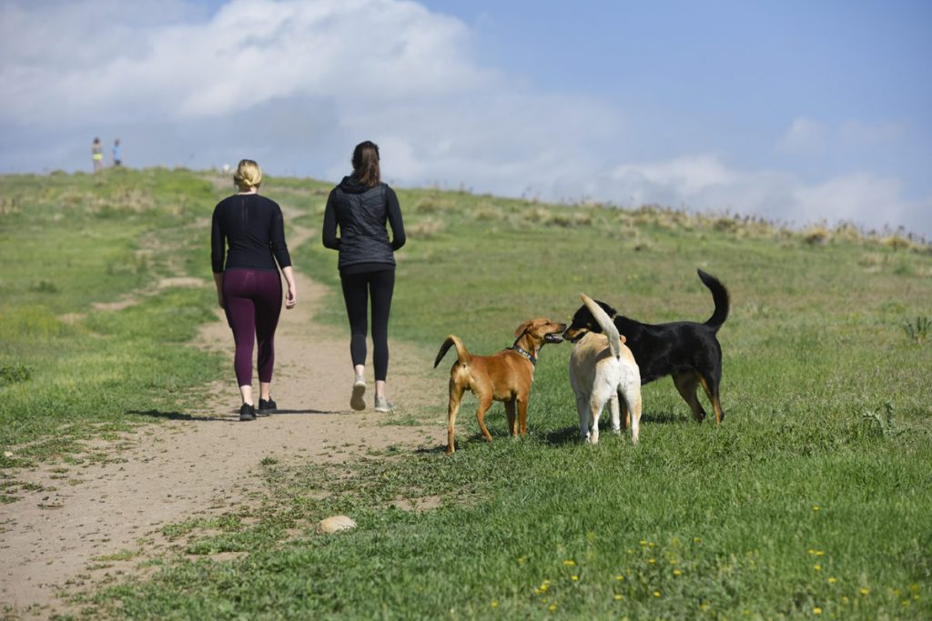 a trio of dogs plays while two women walk up a hill at an off-leash dog park