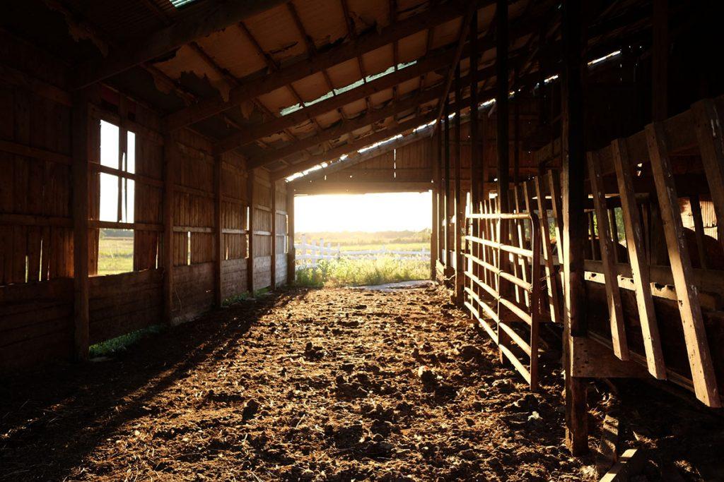 Sunlight streams into a barn in the springtime.