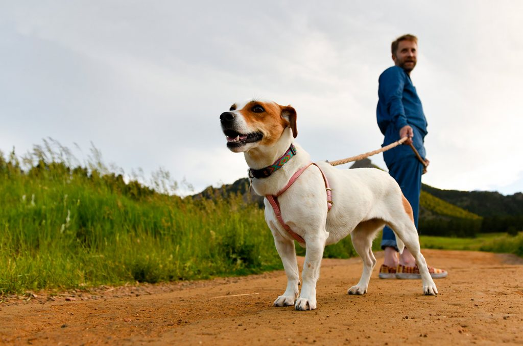 a white and caramel colored Jack Russell terrier mix named Magnolia poses during a stroll at Chautauqua Park in Boulder.