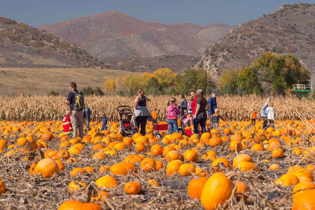 adults and children fill red wagons with pumpkins at Chatfield Farms