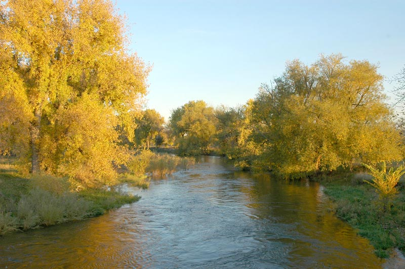 poudre river with fall colors