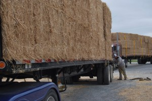 two trucks with straw