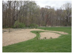 This meadow in the back corner of a demonstration sustainable home landscape was mowed in early spring.  Last year's debris serves as a mulch to reduce weeds as he warm season grasses come up in late spring.