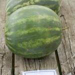 round watermelon