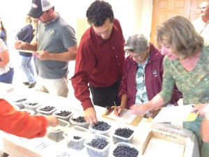 Growers at UD's Small Fruit Meeting evaluate the taste and appearance of blueberries and blackberries