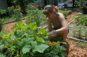 Allison Wagner searching for insects on a squash plant