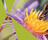 Backyard Bug Observation & Experiments