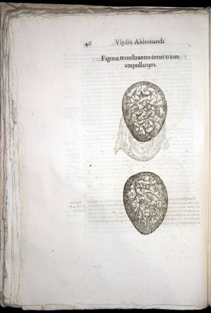 Image of Aldrovandi-1570-0046