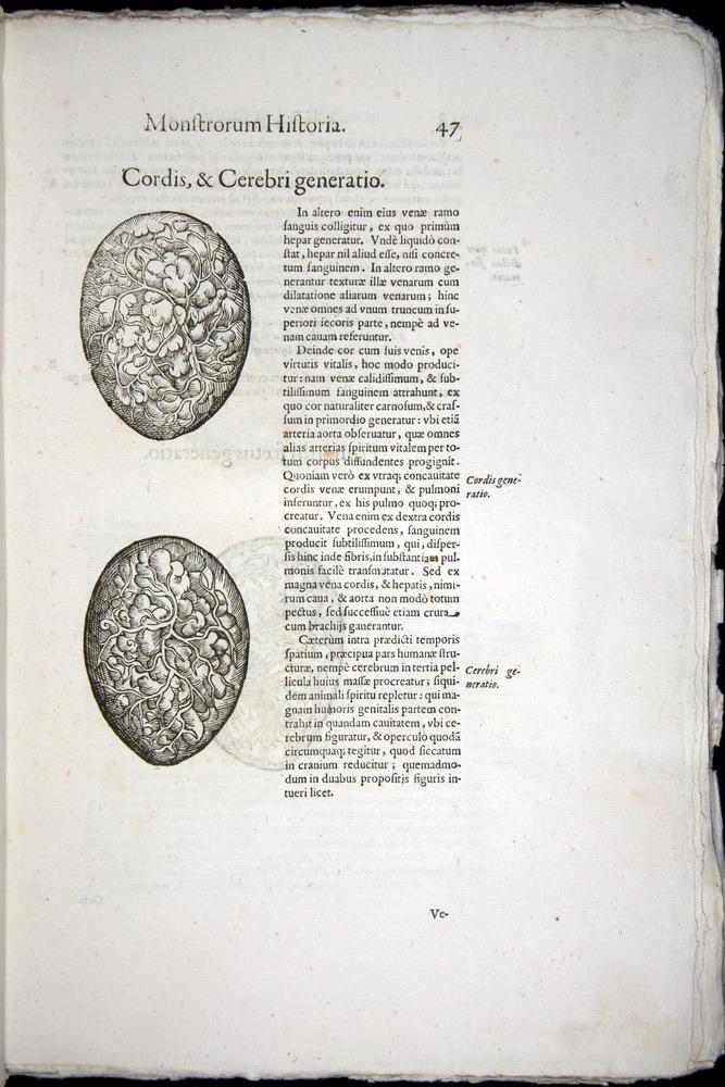 Image of Aldrovandi-1570-0047