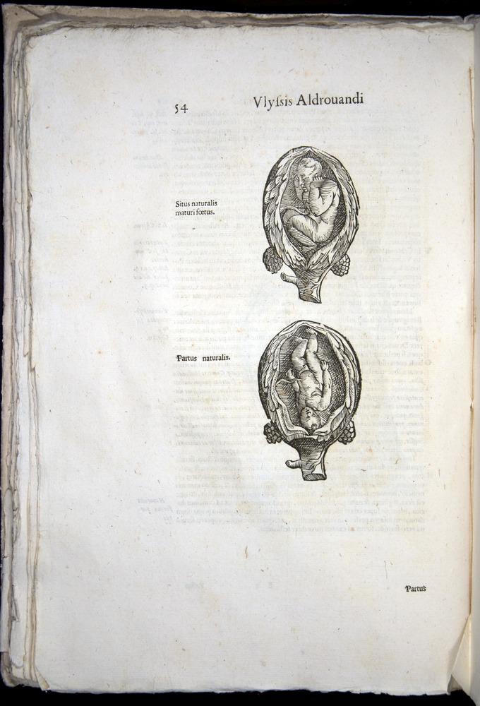 Image of Aldrovandi-1570-0054