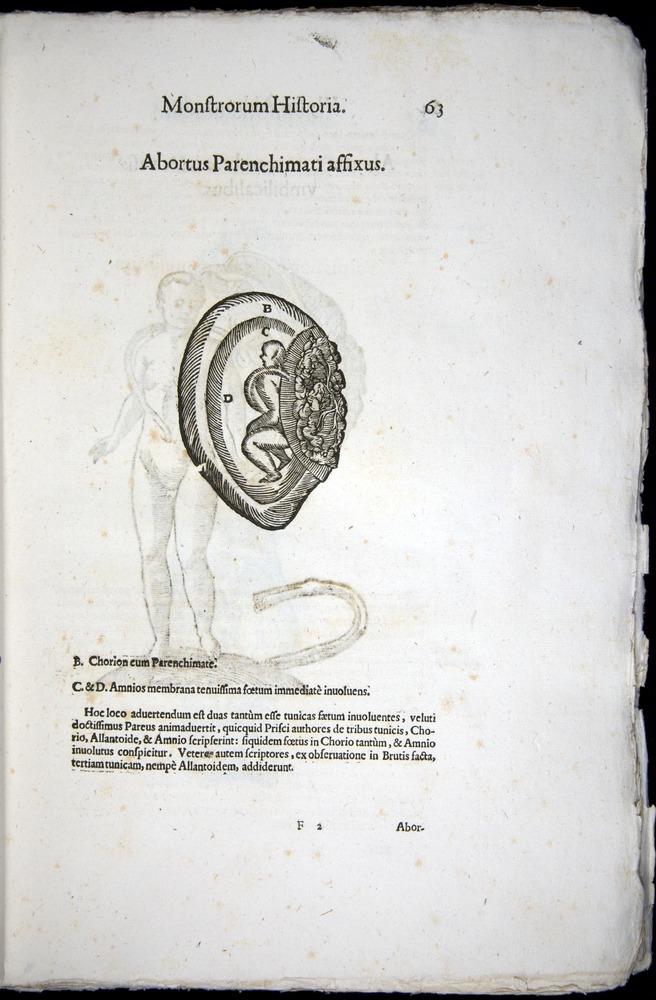 Image of Aldrovandi-1570-0063