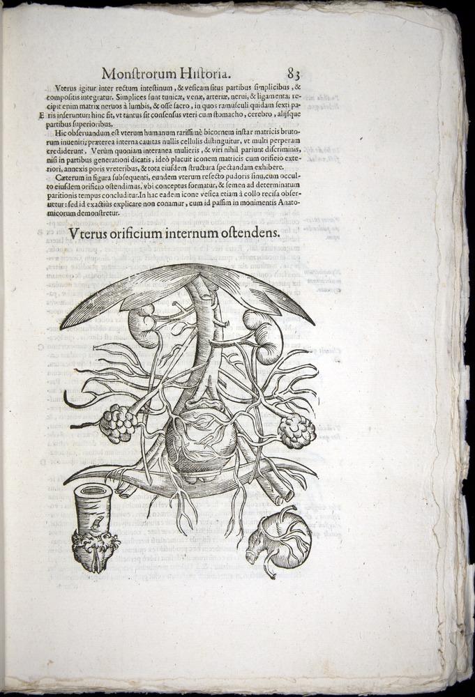 Image of Aldrovandi-1570-0083