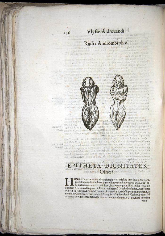 Image of Aldrovandi-1570-0136