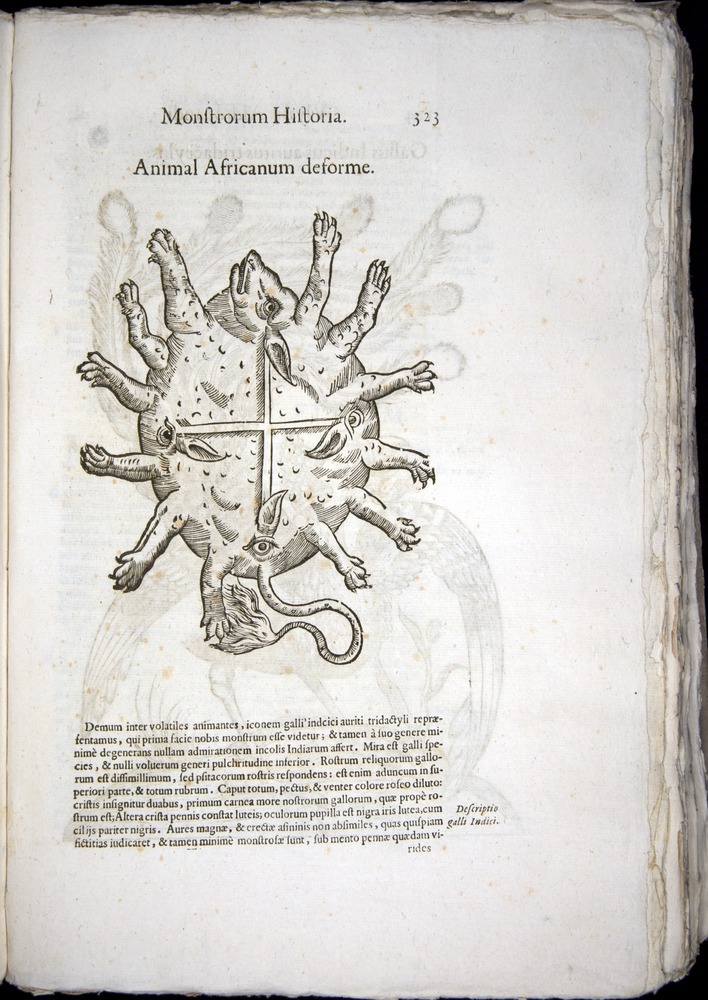 Image of Aldrovandi-1570-0323