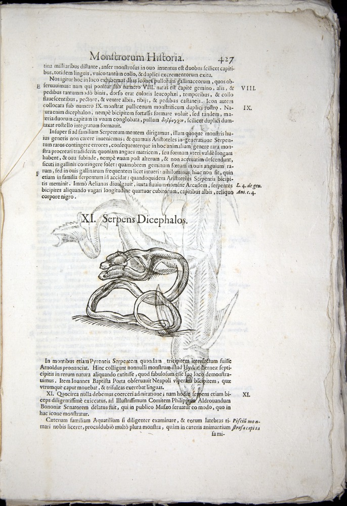 Image of Aldrovandi-1570-0427
