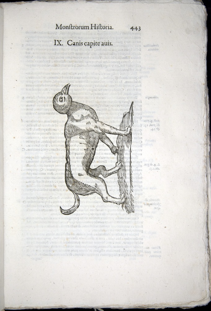 Image of Aldrovandi-1570-0443