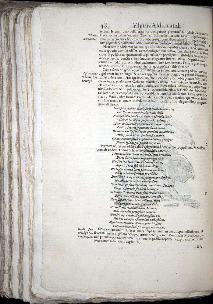 Image of Aldrovandi-1570-0482