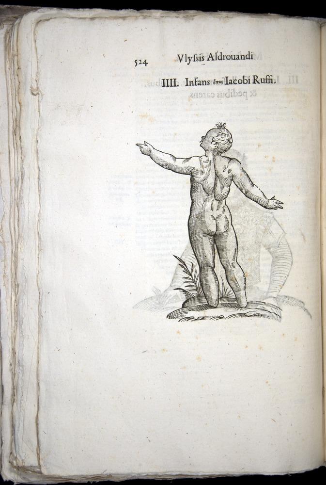 Image of Aldrovandi-1570-0524
