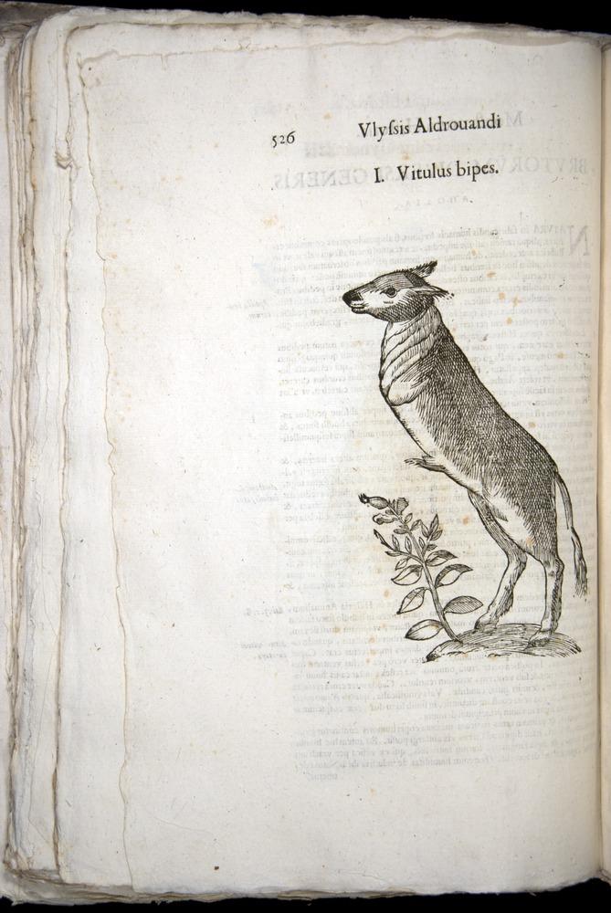 Image of Aldrovandi-1570-0526