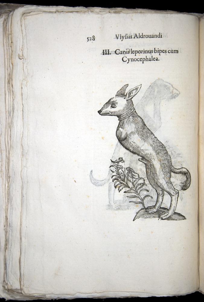 Image of Aldrovandi-1570-0528