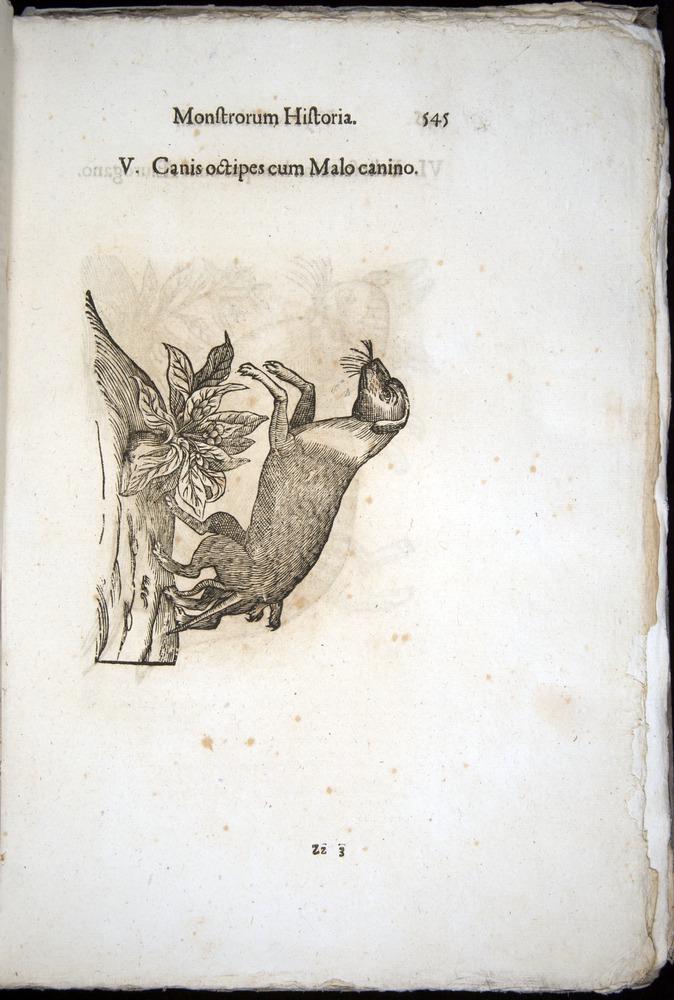 Image of Aldrovandi-1570-0545