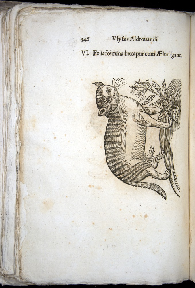 Image of Aldrovandi-1570-0546