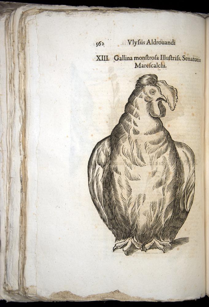 Image of Aldrovandi-1570-0562