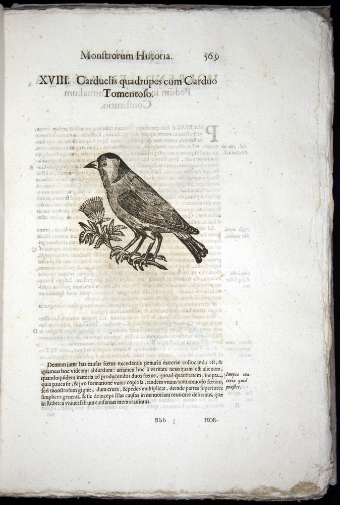 Image of Aldrovandi-1570-0569
