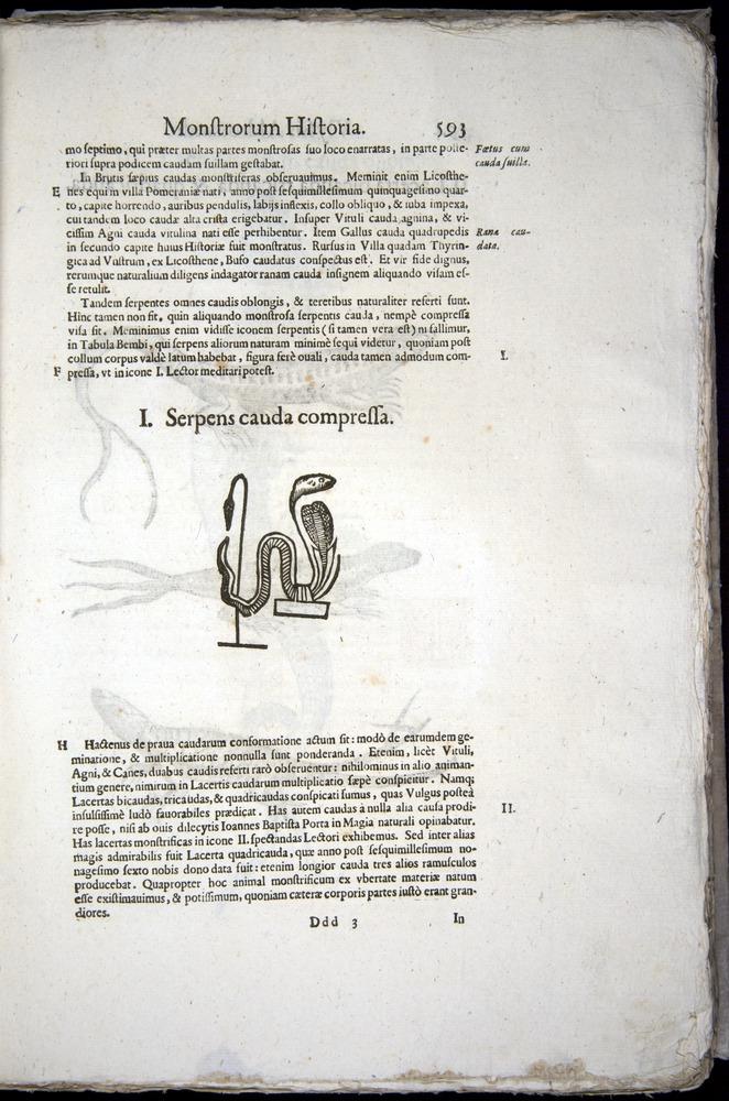 Image of Aldrovandi-1570-0593
