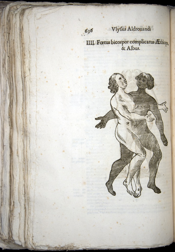 Image of Aldrovandi-1570-0636