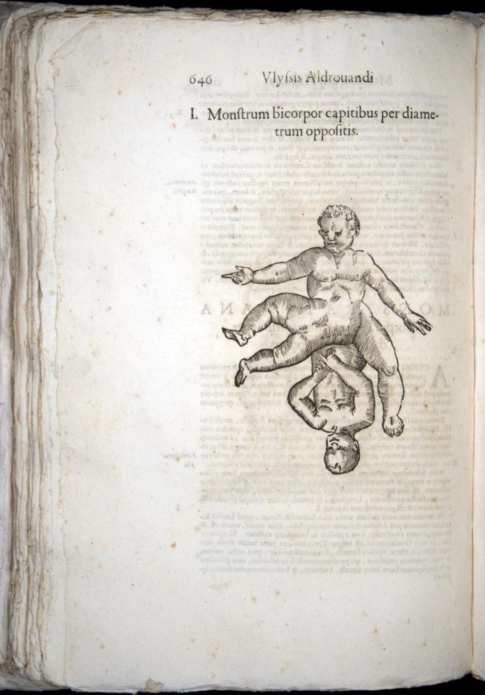 Image of Aldrovandi-1570-0646