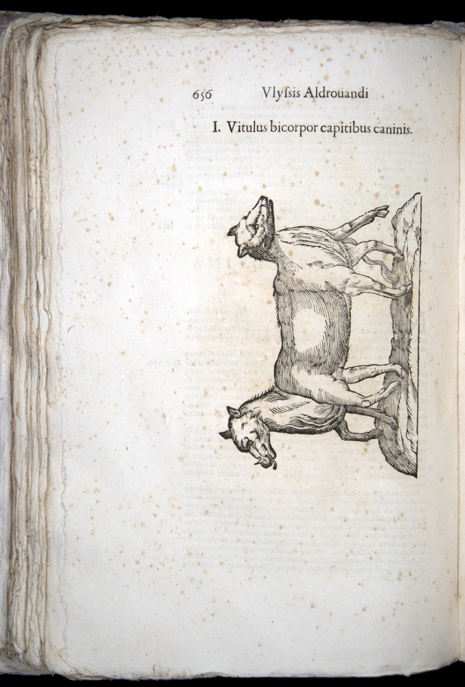 Image of Aldrovandi-1570-0656