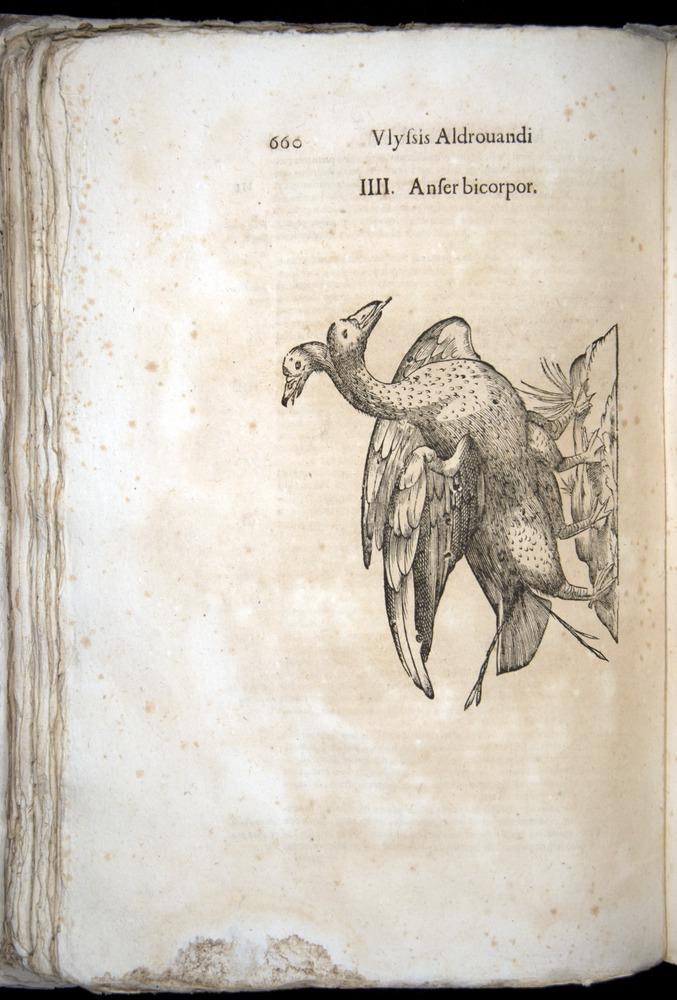 Image of Aldrovandi-1570-0660